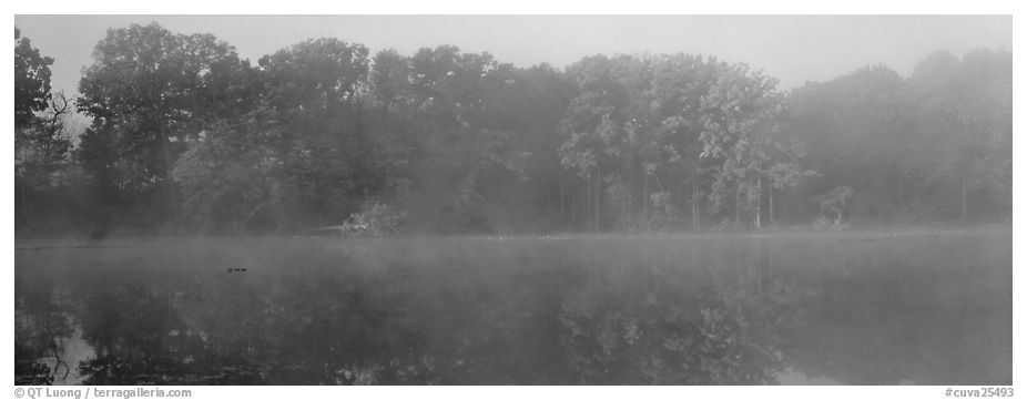Trees reflected in foggy pond. Cuyahoga Valley National Park (black and white)