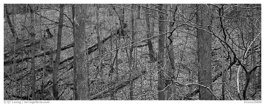 Bare forest with fallen trees on hillside. Cuyahoga Valley National Park (black and white)