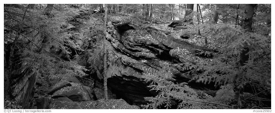 Forest scene with moss-covered limestone rocks. Cuyahoga Valley National Park (black and white)