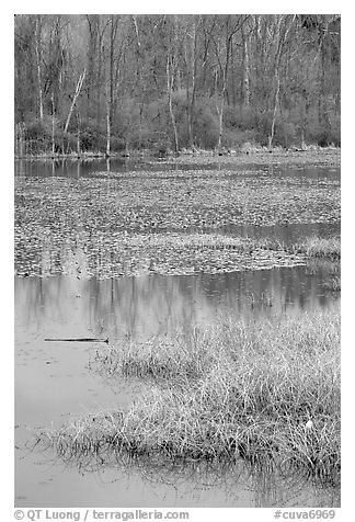 Beaver Marsh and reflections. Cuyahoga Valley National Park (black and white)