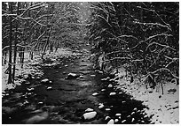 River in snowy forest, Tennessee. Great Smoky Mountains National Park, USA. (black and white)