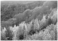Ridges with trees in fall colors, North Carolina. Great Smoky Mountains National Park, USA. (black and white)