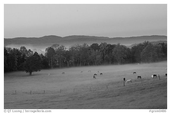 Pasture at dawn with rosy sky, Cades Cove, Tennessee. Great Smoky Mountains National Park (black and white)