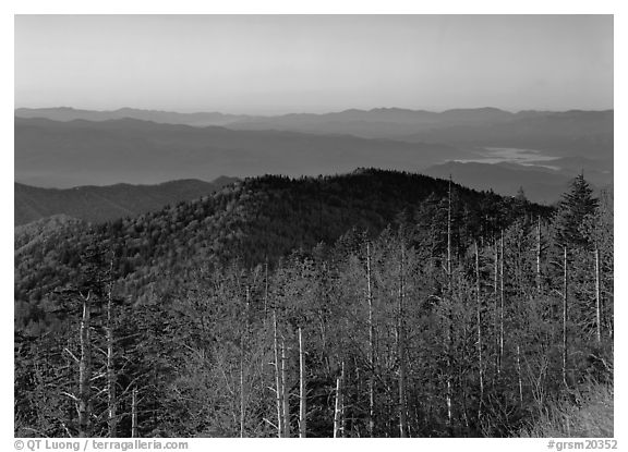 Trees in fall foliage and ridges from Clingman's dome at sunrise, North Carolina. Great Smoky Mountains National Park (black and white)