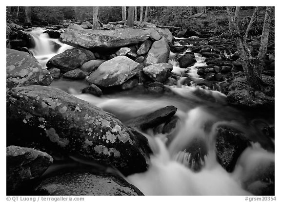 Stream, boulders, and trees, Roaring Fork, Tennessee. Great Smoky Mountains National Park (black and white)