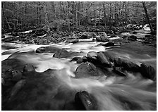 Confluence of the Middle Prong of the Little Pigeon River, Tennessee. Great Smoky Mountains National Park ( black and white)