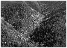 Hillside covered with trees in early spring, North Carolina. Great Smoky Mountains National Park ( black and white)