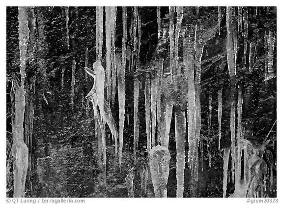 Icicles and rock wall. Great Smoky Mountains National Park (black and white)