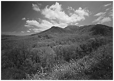 Hillsides covered with trees below Mount Le Conte in the spring, Tennessee. Great Smoky Mountains National Park ( black and white)