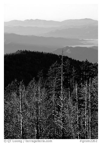 Half-barren trees and ridges from Clingmans Dome at sunrise, North Carolina. Great Smoky Mountains National Park (black and white)
