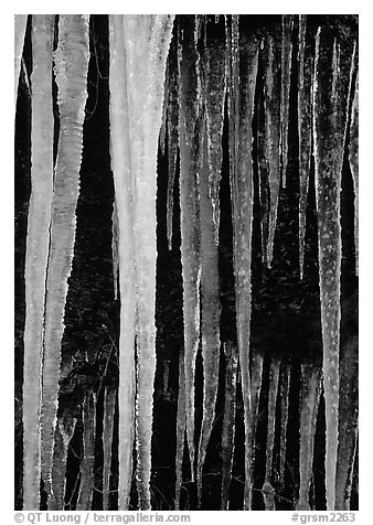 Icicles close-up, Tennessee. Great Smoky Mountains National Park (black and white)