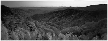 Appalachian autunm landscape of hills with trees in colorful foliage at sunset. Great Smoky Mountains National Park (Panoramic black and white)