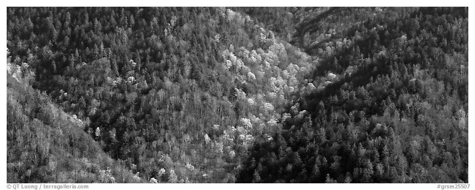 Appalachian hillside in early spring. Great Smoky Mountains National Park (black and white)