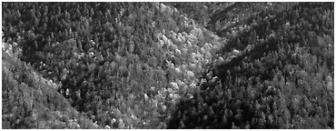 Appalachian hillside in early spring. Great Smoky Mountains National Park (Panoramic black and white)
