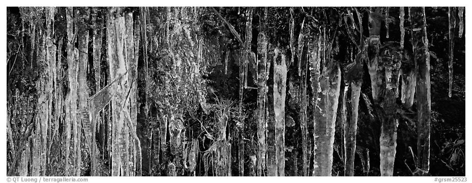Rock with icile tapestry. Great Smoky Mountains National Park (black and white)