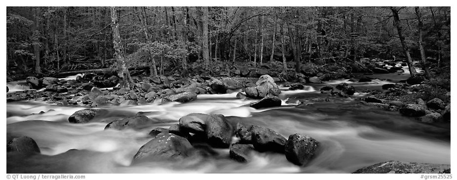 Stream flowing over boulders and spring forest. Great Smoky Mountains National Park (black and white)