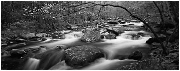 Cascading stream in Appalachian spring forest. Great Smoky Mountains National Park (Panoramic black and white)