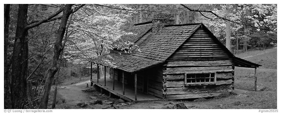 Pioneer cabin in the spring. Great Smoky Mountains National Park (black and white)