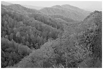 Ridges covered with deciduous trees in fall, North Carolina. Great Smoky Mountains National Park, USA. (black and white)