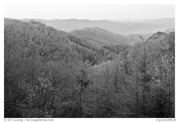 View over mountains in fall colors at dawn, North Carolina. Great Smoky Mountains National Park (black and white)