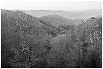 View over mountains in fall colors at dawn, North Carolina. Great Smoky Mountains National Park, USA. (black and white)