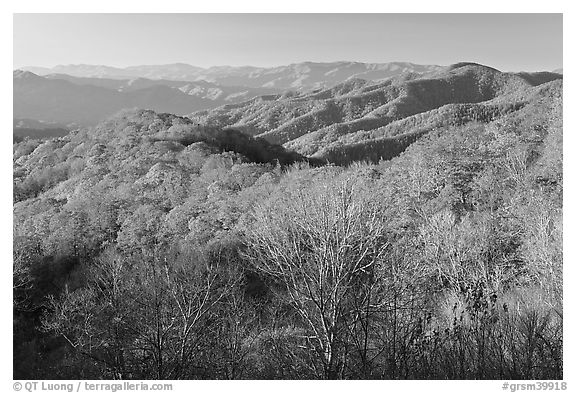Mountains in autumn foliage, early morning, North Carolina. Great Smoky Mountains National Park (black and white)