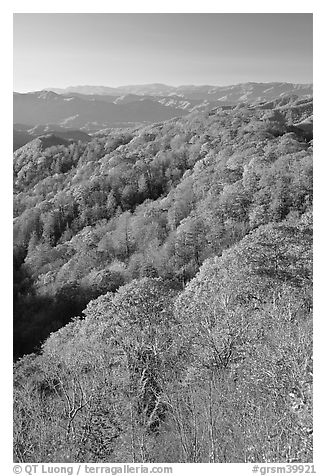 Ridges with trees in fall foliage, North Carolina. Great Smoky Mountains National Park (black and white)