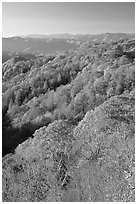 Ridges with trees in fall foliage, North Carolina. Great Smoky Mountains National Park, USA. (black and white)