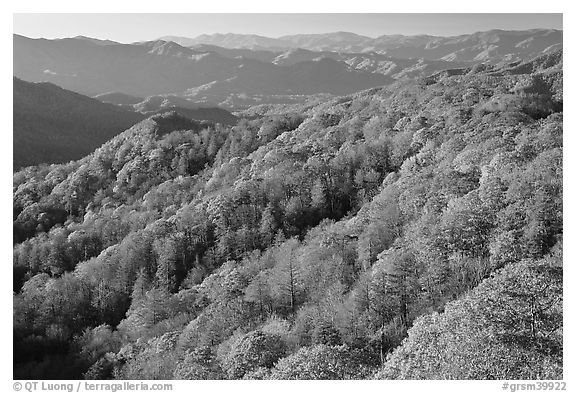 Ridges with trees in autumn foliage, North Carolina. Great Smoky Mountains National Park (black and white)