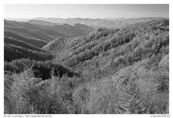 Vista of valley and mountains in fall foliage, morning, North Carolina. Great Smoky Mountains National Park (black and white)