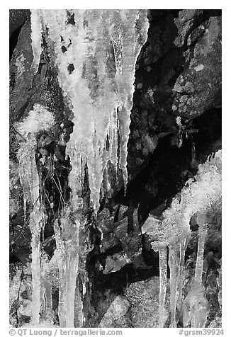 Icicles and rock, overnight frost, North Carolina. Great Smoky Mountains National Park (black and white)