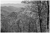 Trees in fall foliage and distant ridges from Newfound Gap road, North Carolina. Great Smoky Mountains National Park, USA. (black and white)