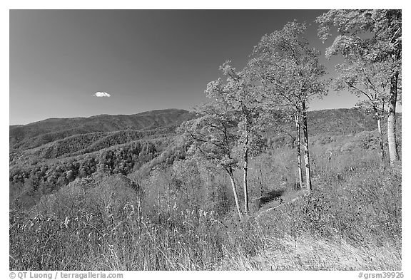 Trees in autumn foliage and mountain view, North Carolina. Great Smoky Mountains National Park (black and white)