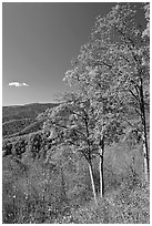 Trees in autumn colors and mountain vista, North Carolina. Great Smoky Mountains National Park ( black and white)