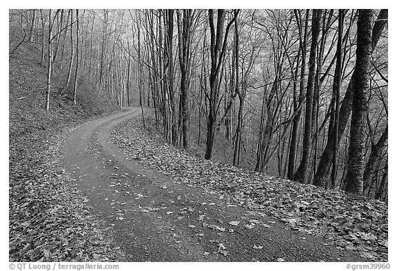 Balsam Mountain Road in autumn forest, North Carolina. Great Smoky Mountains National Park (black and white)
