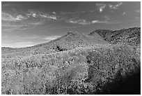 Slopes and hills in fall foliage with mountain behind, Tennessee. Great Smoky Mountains National Park ( black and white)