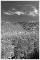 Mount Le Conte and slopes in autumn colors, Tennessee. Great Smoky Mountains National Park ( black and white)