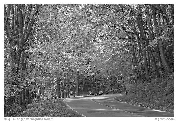 Newfoundland Gap road during the fall, Tennessee. Great Smoky Mountains National Park (black and white)