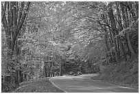 Newfoundland Gap road during the fall, Tennessee. Great Smoky Mountains National Park, USA. (black and white)
