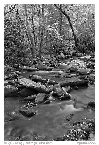 Stream in autumn, Roaring Fork, Tennessee. Great Smoky Mountains National Park (black and white)