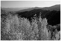Trees in fall colors and backlit hillside near Newfound Gap, Tennessee. Great Smoky Mountains National Park, USA. (black and white)
