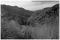 Valley covered with trees in late autumn, Morton overlook, Tennessee. Great Smoky Mountains National Park, USA. (black and white)