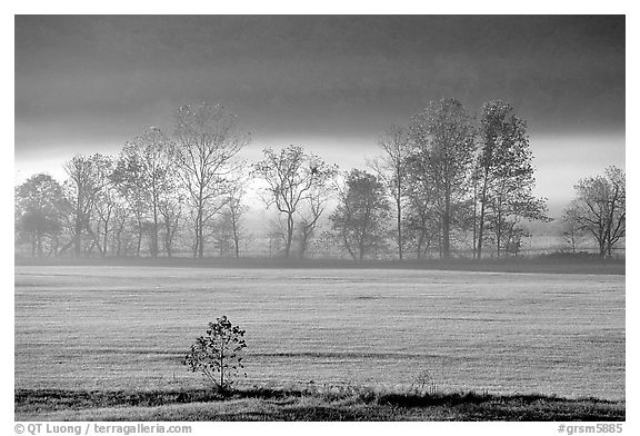 Meadow, trees, and fog, early morning, Cades Cove, Tennessee. Great Smoky Mountains National Park (black and white)