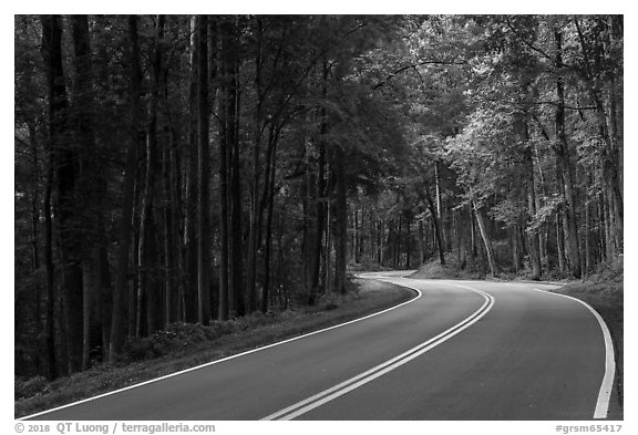Newfound Gap Road, Tennessee. Great Smoky Mountains National Park (black and white)