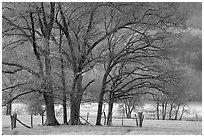 Trees in fenced meadow, early spring, Cades Cove, Tennessee. Great Smoky Mountains National Park ( black and white)