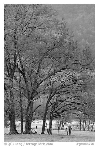 Meadow with trees in early spring, Cades Cove, Tennessee. Great Smoky Mountains National Park (black and white)