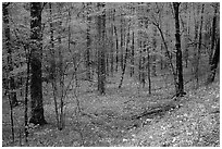 Forest in spring with wildflowers, North Carolina. Great Smoky Mountains National Park ( black and white)
