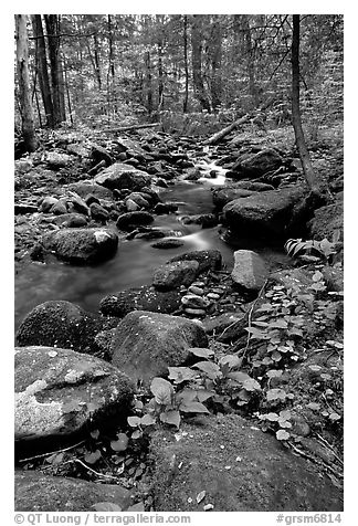 Mossy boulders and Cosby Creek, Tennessee. Great Smoky Mountains National Park (black and white)