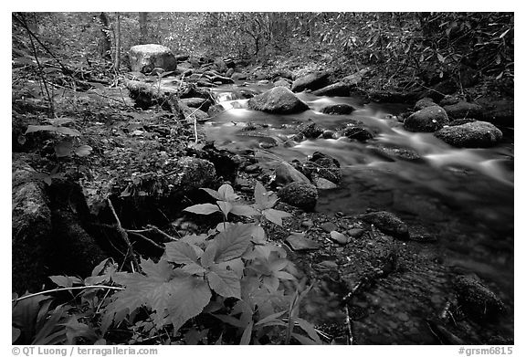 Cosby Creek, Tennessee. Great Smoky Mountains National Park (black and white)