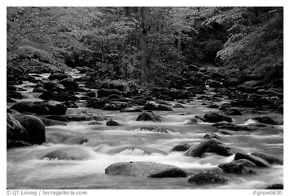Middle Prong of the Little Pigeon River, Tennessee. Great Smoky Mountains National Park (black and white)